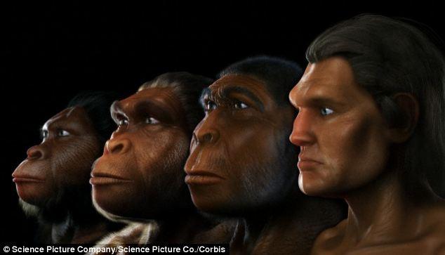 """Résultat de recherche d'images pour """"evolução humana"""""""